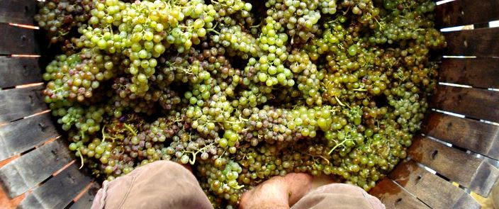 grape natural wine